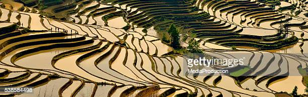 rice terraces - yuanyang stock pictures, royalty-free photos & images
