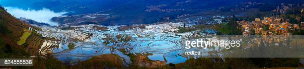rice terraces - yunnan province stock pictures, royalty-free photos & images