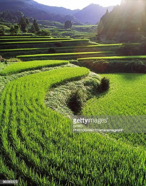 rice terraces, saga prefecture, kyushu, japan - 佐賀県 ストックフォトと画像