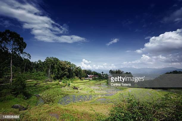 Rice terraces, Tana Toraja