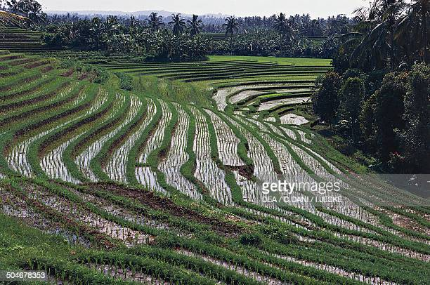 Rice terraces Tirta Gangga Cultural Landscape of Bali Province Indonesia