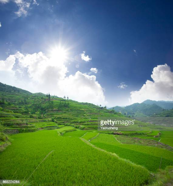 Rice terraces under blue sky and sun,Yunnan,China