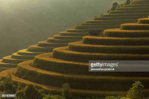rice terraces, vietnam - natural pattern stock pictures, royalty-free photos & images