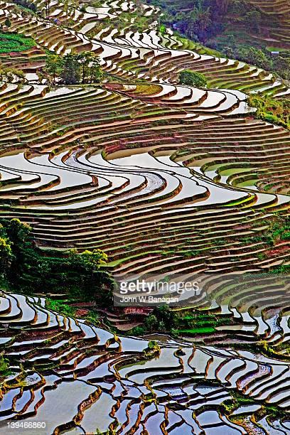 rice terraces , yuanyang, yunnan, china - yuanyang stock-fotos und bilder