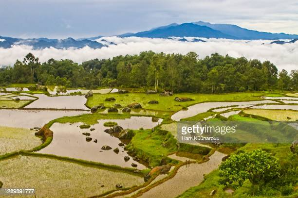 ricefields in clouds - makassar stock pictures, royalty-free photos & images