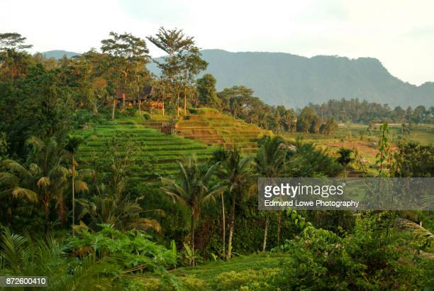 Ricefields of the Sidemen Valley, Bali, Indonesia.