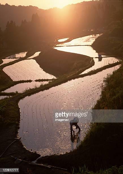 Rice-planting