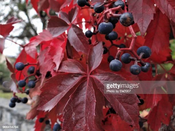 Rich harvest in autumn