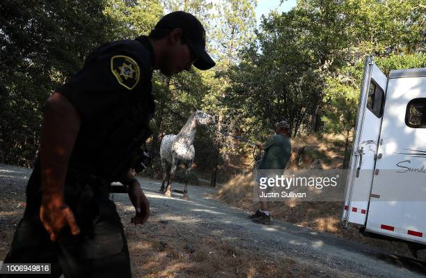 Rich Newell tries to get his horse Ike into a trailer as he evacuates ahead of the approaching Carr Fire on July 28 2018 in Lewiston California A...