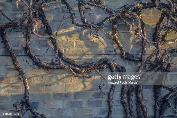 Rich, Textured Orchards and Vines