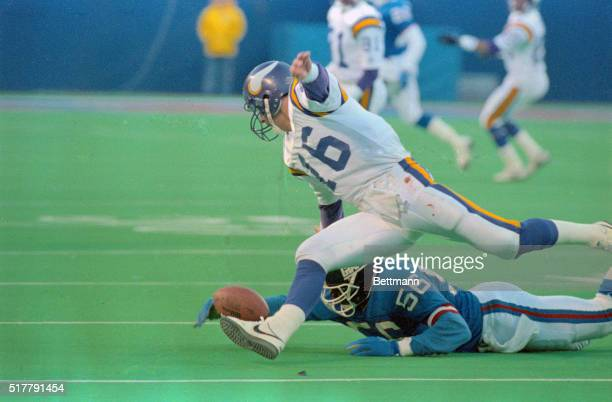Richard Gannon of the Minnesota Vikings is sacked by Lawrence Taylor of the New York Guants and fumbles the ball which goes out of bounds Taylor...