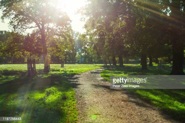 richmond park in london in the morning - richmond park stock pictures, royalty-free photos & images