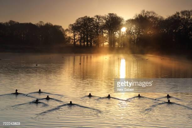 """""""richmond park, london, england."""" - alex saberi imagens e fotografias de stock"""