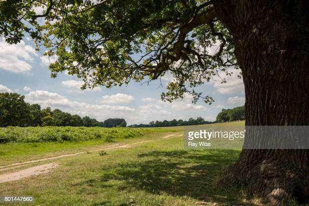 richmond park looking west from robin hood gate end. - リッチモンド公園 ストックフォトと画像