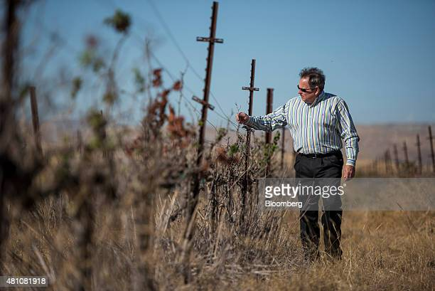 Rick Gilmore general manager for Byron Bethany Irrigation District inspects dried chardonnay grape vines at the Clifton Court Vineyard in Byron...