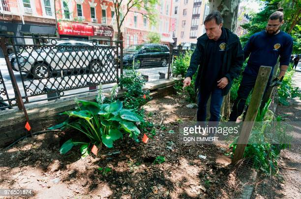 Rick Simeone director of pest control for New York City's health department and a health department worker look for rat burrows in Sara D Roosevelt...