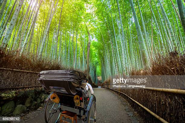rickshaw for sightseeing at bamboo forest of arashiyama in kyoto, japan. - rickshaw stock photos and pictures