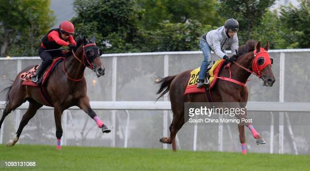 ridden by Alexis Badel and OWNERS' DELIGHT galloping on the turf at Sha Tin 27Nov17