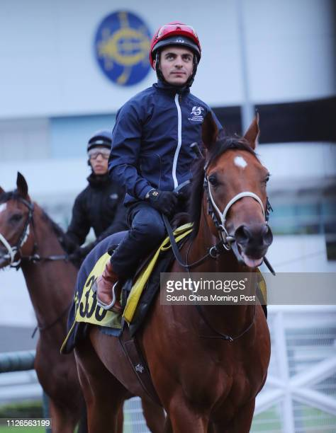 HORSE ridden by Andrea Atzeni ready to gallop on the all weather track at Sha Tin on 05Dec14
