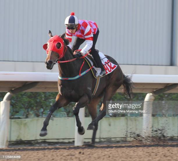 Ridden by Ben So Tik-hung, won the barrier trial batch 3 over 1200Metres (All Weather Track at Sha Tin on 26Nov13.