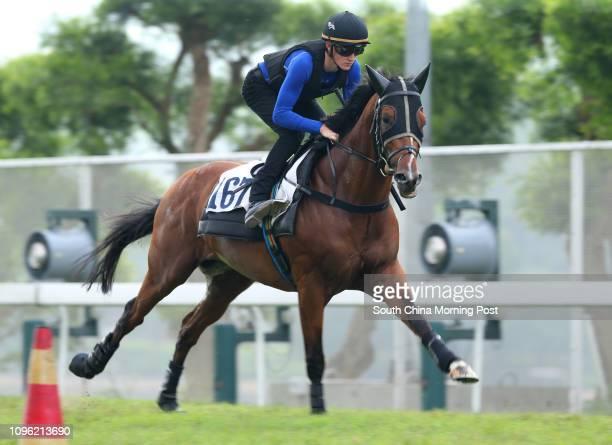 PARAGON ridden by Chad Schofield galloping on the turf at Sha Tin 26MAY16