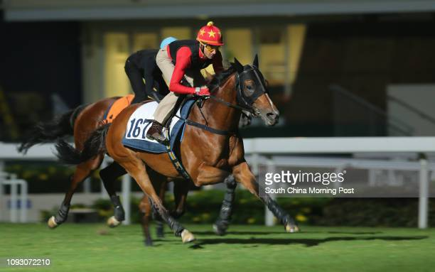 PARAGON ridden by Douglas Whyte and BOOMING DELIGHT ridden by Karis Teetan galloping on the turf at Sha Tin 19OCT17