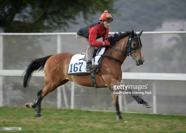 PARAGON ridden by Douglas Whyte galloping on the turf at Sha Tin 11FEB16