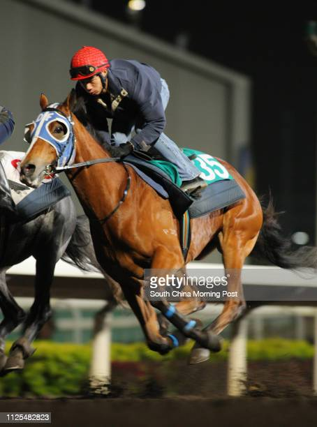 ORANGE ridden by Howard Cheng Yuetin gallop on the all weather track at Sha Tin on 18Feb13