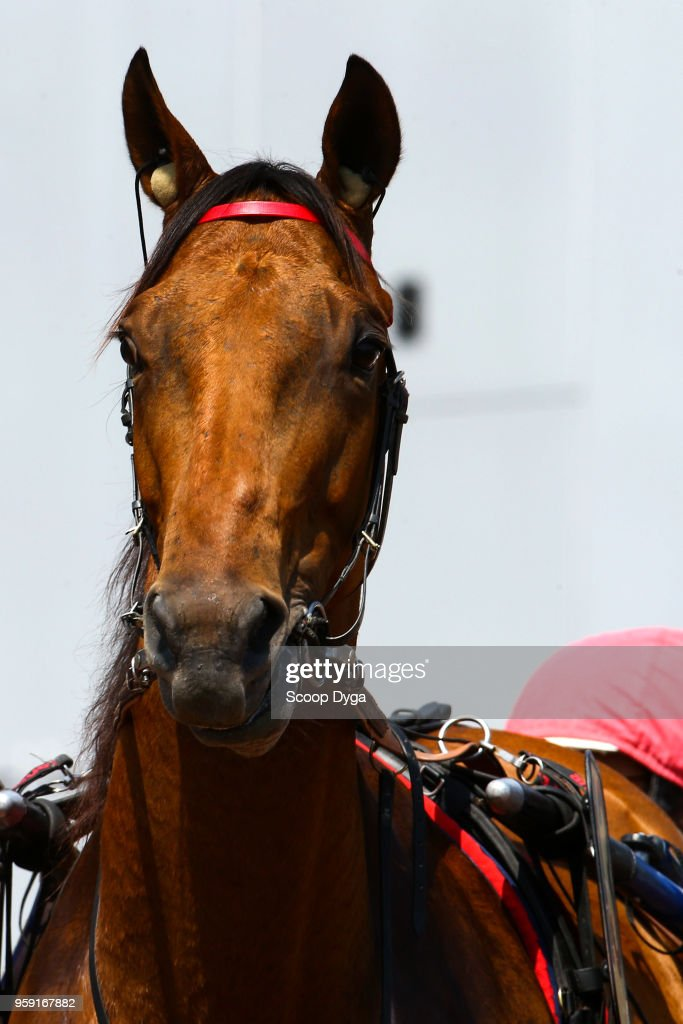GERS ridden by Jean Michel BAZIRE, trainer Jean Michel BAZIRE, owner Ecurie Jean Michel BAZIRE during Prix ducs de Normandie on May 16, 2018 in Caen, France.