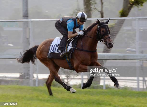 PARAGON ridden by Joao moreira galloping on the turf at Sha Tin 28APR16