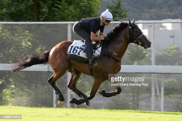 PARAGON ridden by Joao Moreira galloping on the turf at Sha Tin on 04Jul16