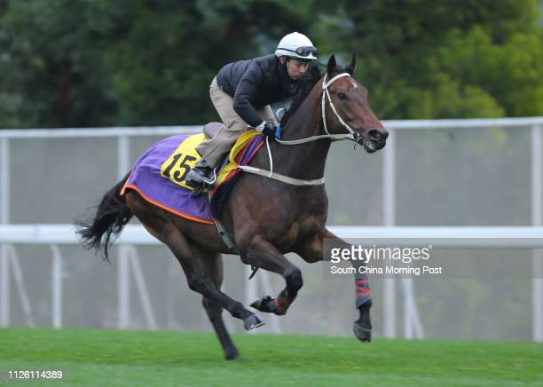 STAR ridden by Matthew Chadwick gallop on the turf at Sha Tin on 13Feb14