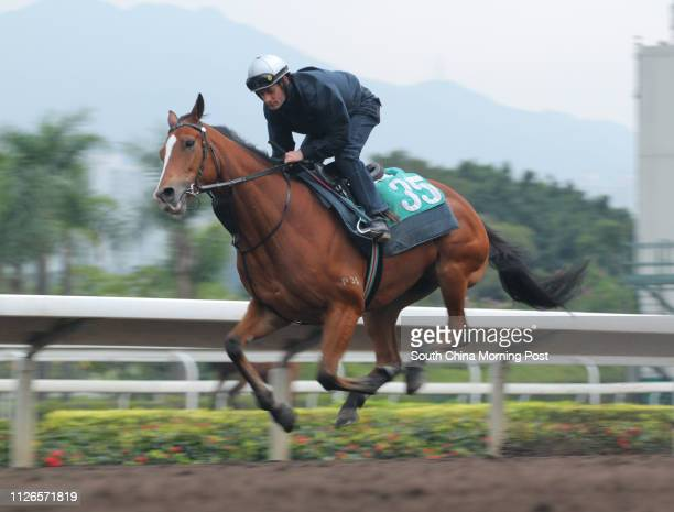 ORANGE ridden by Micro Demuro gallop on the all weather track at Sha Tin 15DEC14