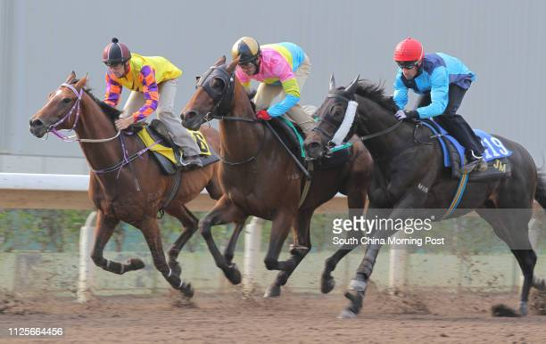 Ridden by Neil Callan, CANNY FRANCO ridden by Olivier Doleuze and ADDOLE ridden by Tye Angland trial in batch 2 over 1200Metres All Weather Track....