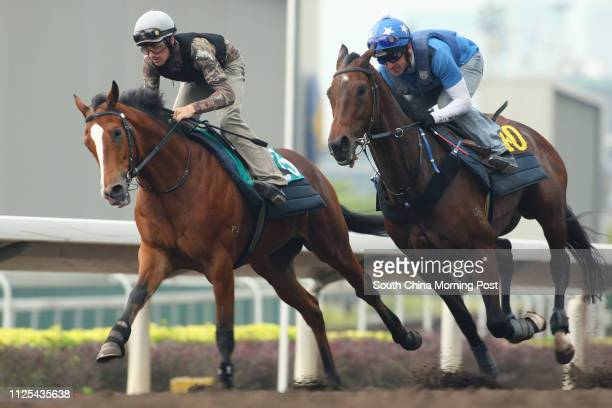 ORANGE ridden by Tim Clark and LIBERATOR gallop on the all weather track at Sha Tin on 15Nov12