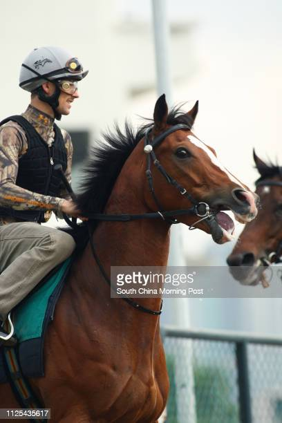 ORANGE ridden by Tim Clark ready to gallop on the all weather track at Sha Tin on 15Nov12