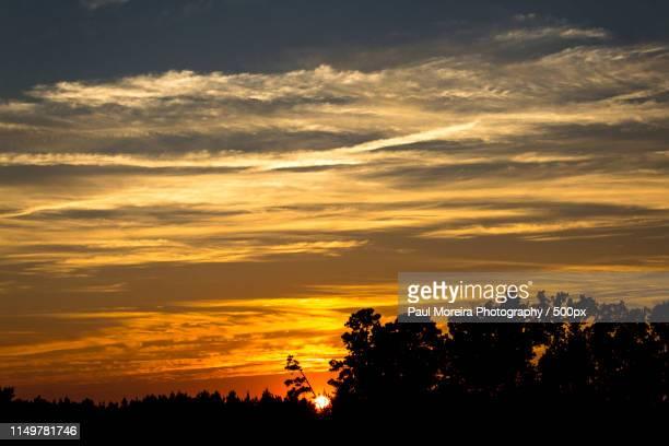 ride the sunset - cary stockfoto's en -beelden