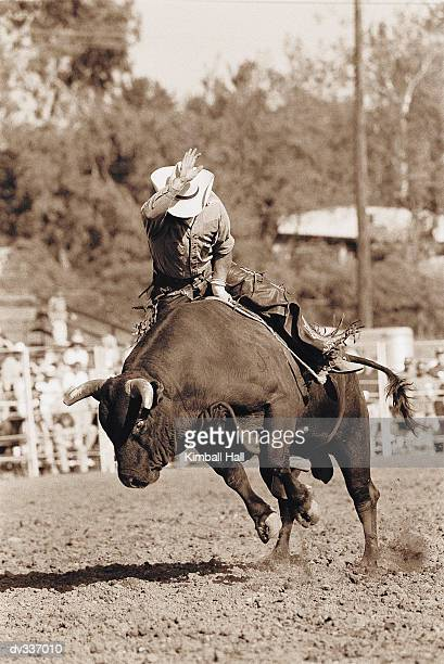 Rider about to fall off bucking bull
