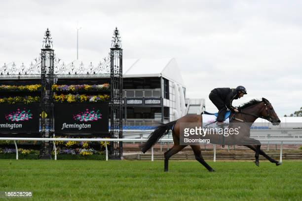 A rider and horse Zonza test the track during early morning trackwork at Flemington Racecourse venue for the Melbourne Cup thoroughbred horse race in...