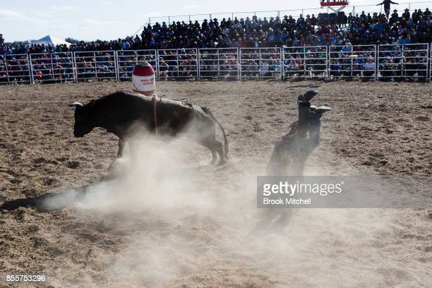 A rider is thrown during the Deni Rodeo at the 2017 Deni Ute Muster on September 30 2017 in Deniliquin Australia The annual Deniliquin Ute Muster is...