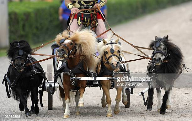 Rider Johnny Tange competes with his miniature horses at the 'wagon race' in Berlin August 8 2010Wannabe Gladiators compete with their chariots at a...