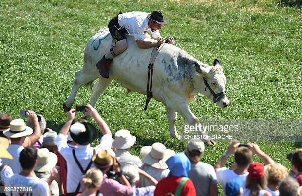 TOPSHOT Rider Michael Pfatrisch rides his ox named 'Baze' during the semi final competition race of the traditional sixth ox race in Muensing near...