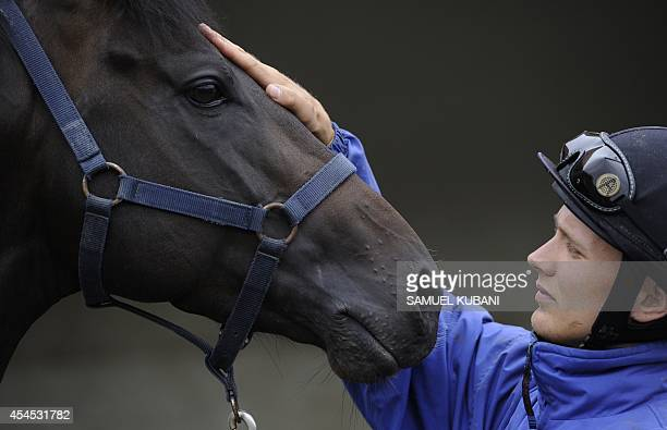 Rider prepares his horse for a ride during a training day at Vampil yard 20km near Malacky, Slovakia on September 3, 2014. AFP PHOTO/SAMUEL KUBANI