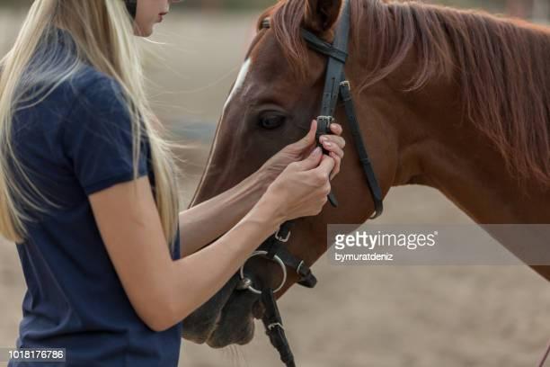 ライダーは馬をサドルします。 - 手綱 ストックフォトと画像