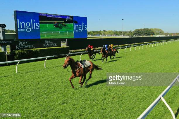 Riderless Nature Strip is seen in heat 1 after James McDonald was dislodged at the start during the barrier trials at Royal Randwick Racecourse on...