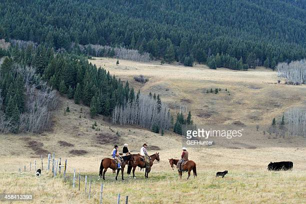 riders and round up - foothills stock pictures, royalty-free photos & images