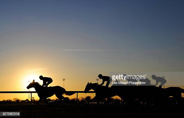 Riders and their horses seen against the setting afternoon sun riding down the track at Kempton Park racecourse near London during a race meeting on...
