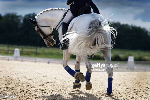 riding a white horse in a corral  - equestrian event stock pictures, royalty-free photos & images