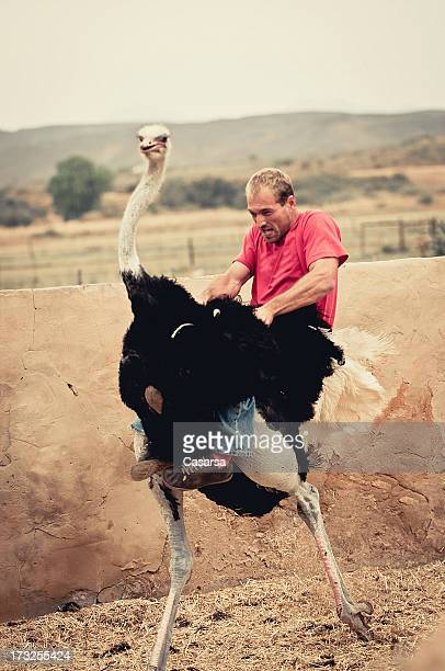 riding an ostrich - ostrich stock pictures, royalty-free photos & images