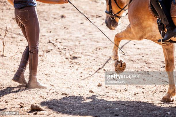 riding and petting the horse - dressage horse russia stock photos and pictures